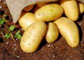 SZPI potvrdila kvalitu potravin se značkou Klasa a Regionální potravina