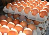Na trh nesmí bez kontroly žádné vejce ze zemí EU. Je kontaminace už v Česku?