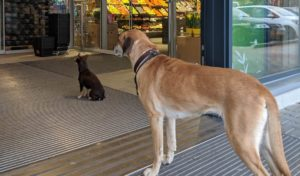 Pes do obchodu nepatří (?)