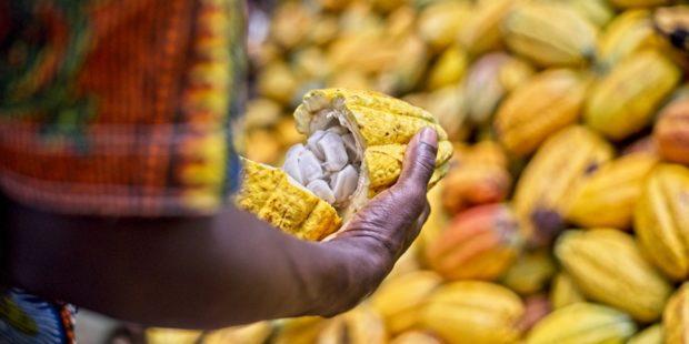 Fairtrade zboží se v Česku prodává stále více, vládnou kakao a káva