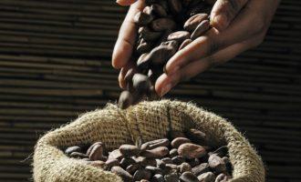 Kakao ve výrobcích značky KitKat nově s certifikací Rainforest Alliance