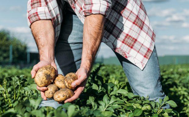 Rohlík spouští podpůrný program pro menší farmáře